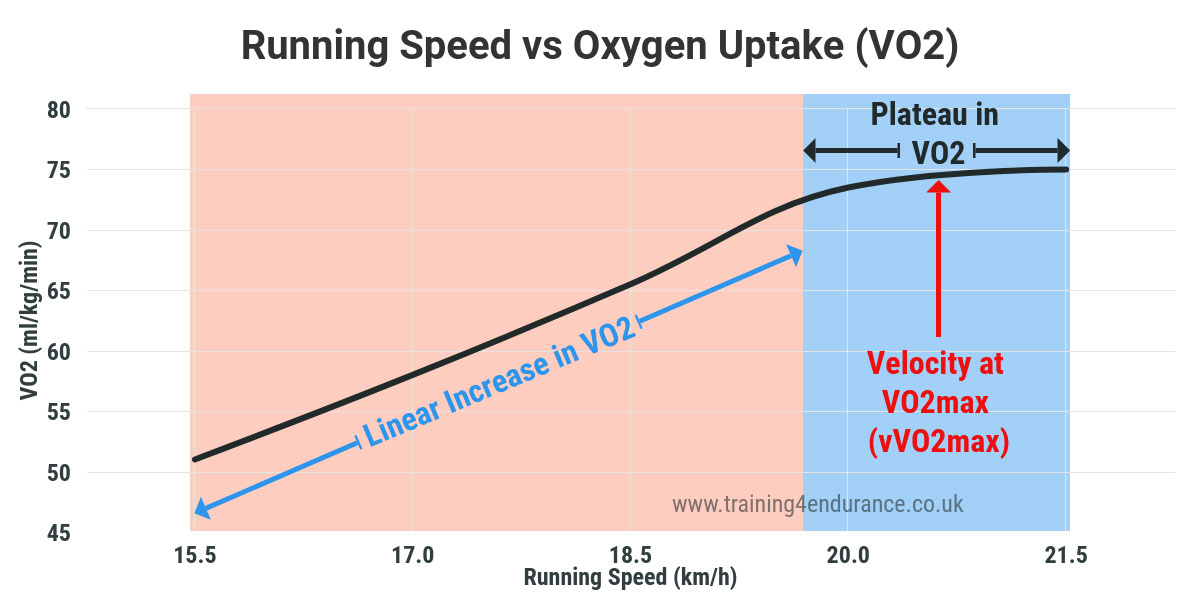 vVO2max - oxygen uptake vs running speed